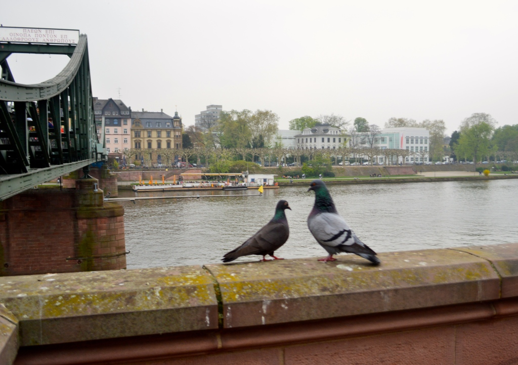 Just two lovebirds checking out Frankfurt