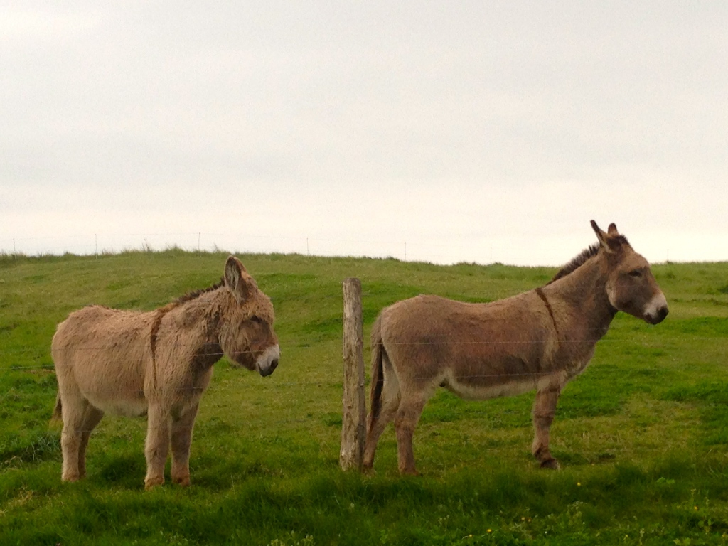 A few of the locals.