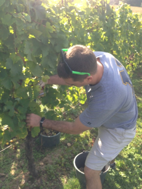 """S at work. Meanwhile, I was """"testing"""" grapes."""